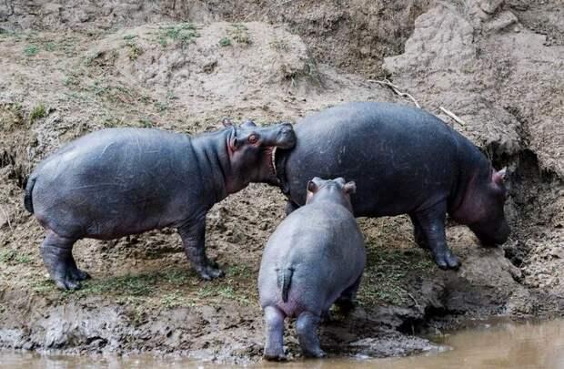Животные, которые сами бы посмеялись над своими фотками, если б могли