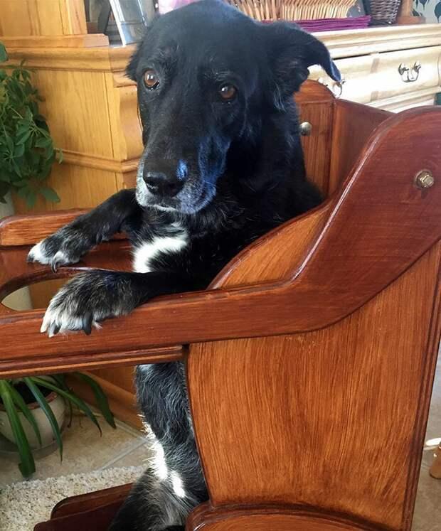 Больная собака не могла нормально есть, и хозяева нашли решение болезни животных, животные, забота, мило, питомцы, собака, собаки, фото