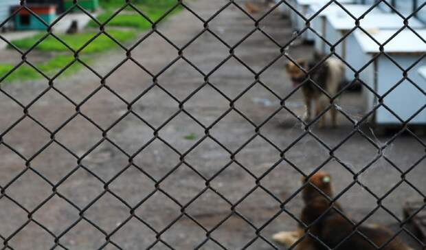 «Пущено насамотек»: Кто вКазани занимается отловом бездомных собак?