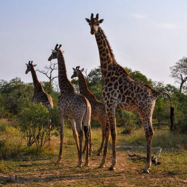 Гид по Свазиленду