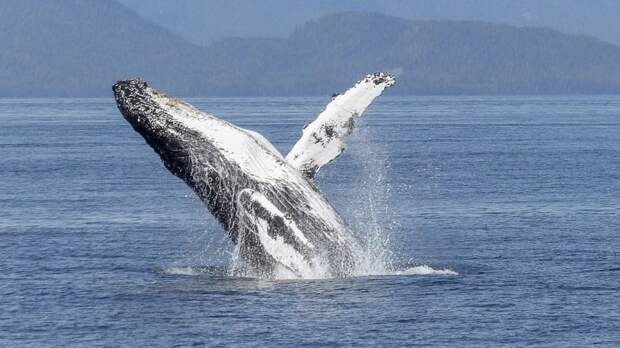 Лечивший проглоченного дайвера врач усомнился в правдивости истории о ките