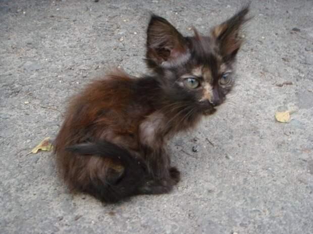 Онажемать и котята животные, история, коты