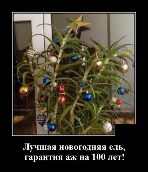 Демотиватор про новогоднюю ёлку