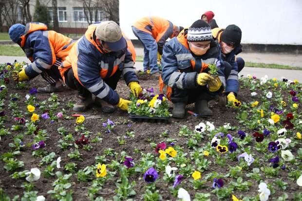 Видео: в СВАО провели семинар по высаживанию рассады в цветники