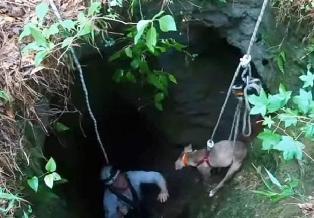 Собаку вытаскивают из ямы