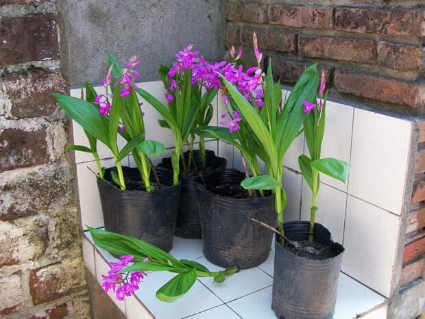 Необычные виды домашних орхидей: какую выбрать? фото