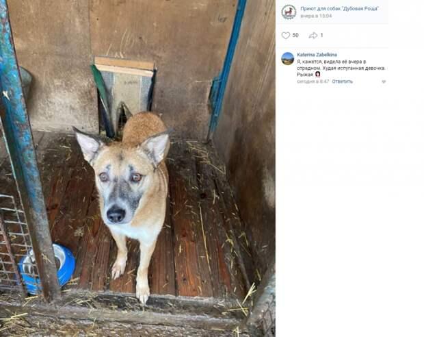 Сбежавшую из приюта «Дубовая Роща» собаку разыскивают в Марфине