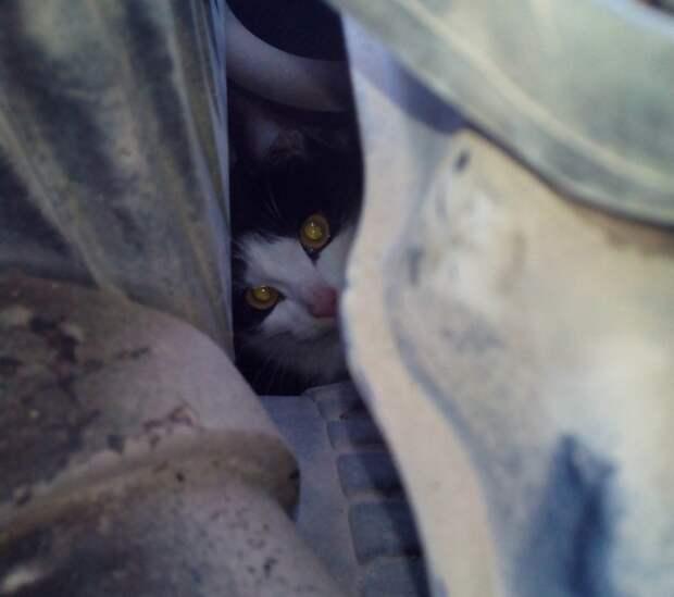 В Уфе кот выжил, проехав полдня под капотом машины