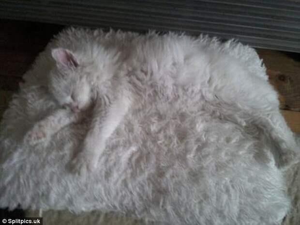 3. Пушистая деталь интерьера домашние животные, коты, кошки, маскировка, маскируется, прятки, смешные кошки
