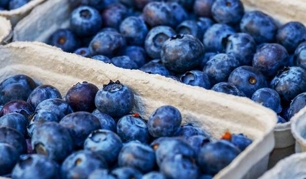 Крупного производителя ягодной продукции Карелии хотят признать банкротом