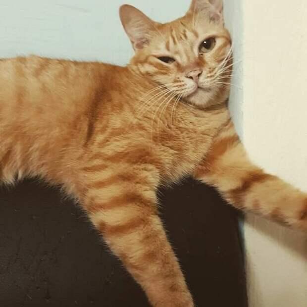 20 странных вещей, которые делают все владельцы котов, но не признаются в этом