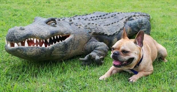 Американец поймал огромного аллигатора и понял, куда почти 25 лет пропадали собаки