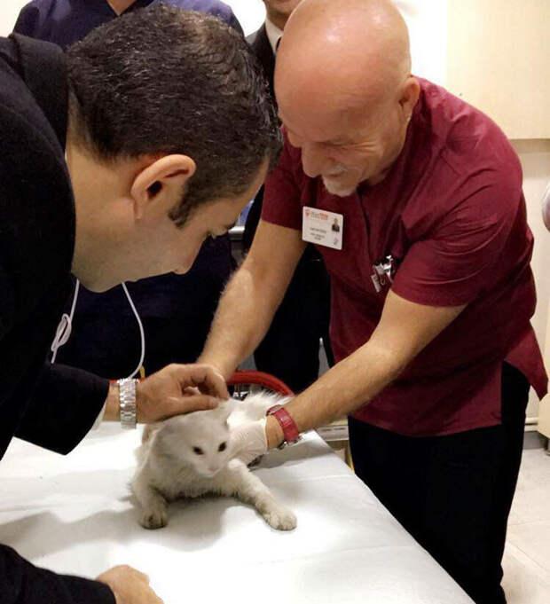 Врач-реаниматолог спас  кошку, сделав ей массаж сердца видео, животные, кошка, медицина, спасение