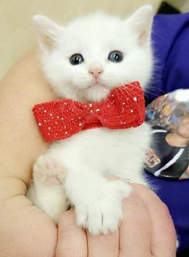 Маленького и беззащитного котенка с «дефектами» лап бросили в больнице, но у него появилась «пушистая мама»