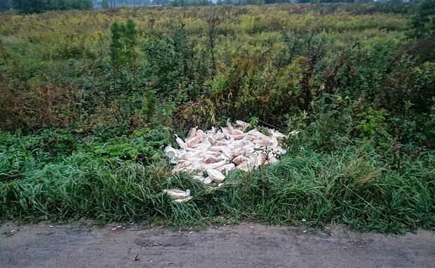В Туле нашли огромную свалку хлебных батонов