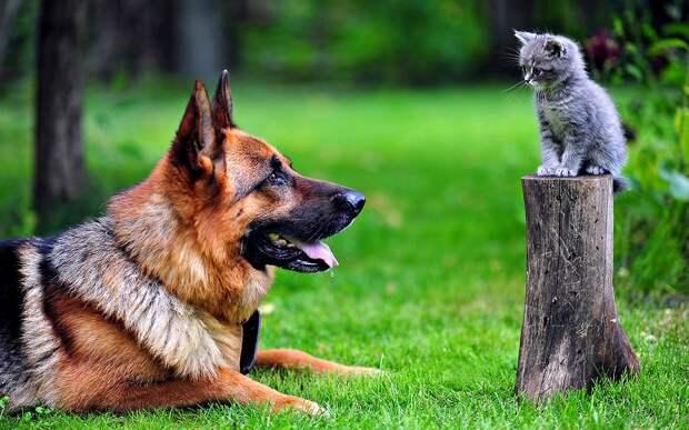 Служебный кот
