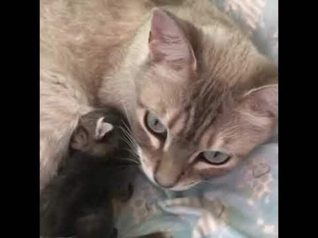Кошка приняла котёнка-сироту – эти двое были очень нужны друг другу