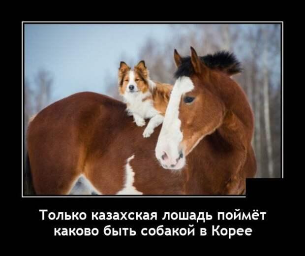 Демотиватор про лошадь