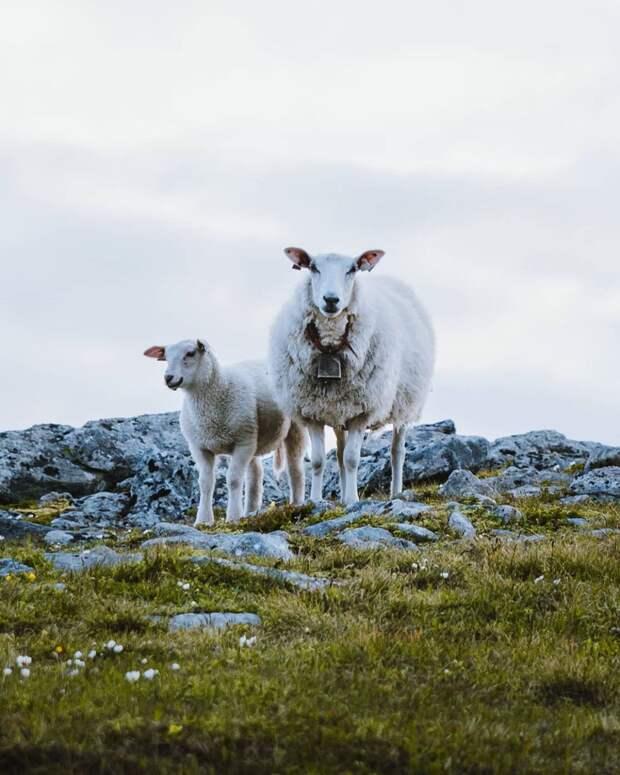 Очарование Севера: чудесная Лапландия на фото