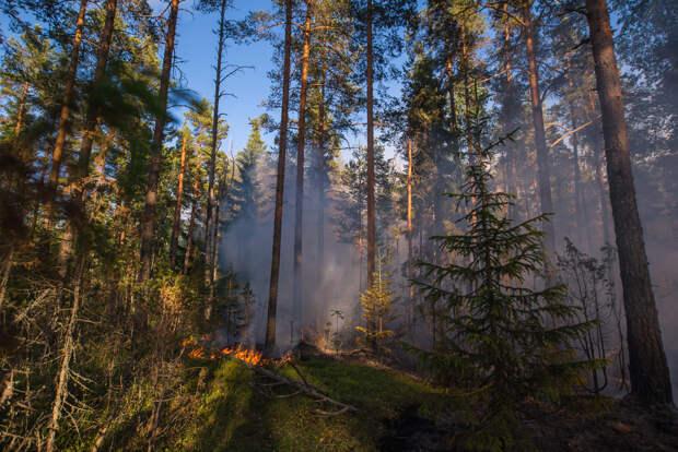 «У каждого пожара есть автор». Как команда друзей из Петербурга с 2008 года борется с огнем на Ладожских шхерах — и привлекает сотни волонтеров