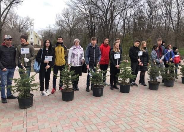 Уже взрослые ели высадят взамен украденных всквере Чуковского вРостове