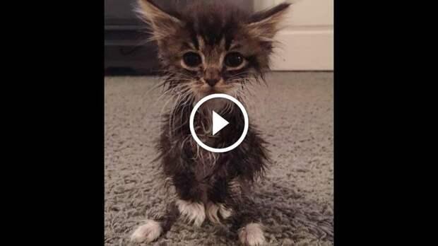 Когда этот котенок появился на свет, были все предпосылки к тому, что он долго не проживет...