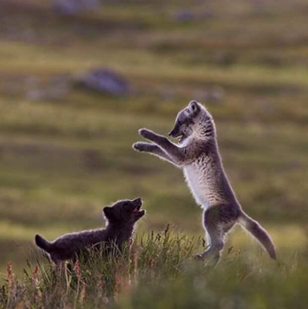 Позитивные картинки живой природы (12 фото)