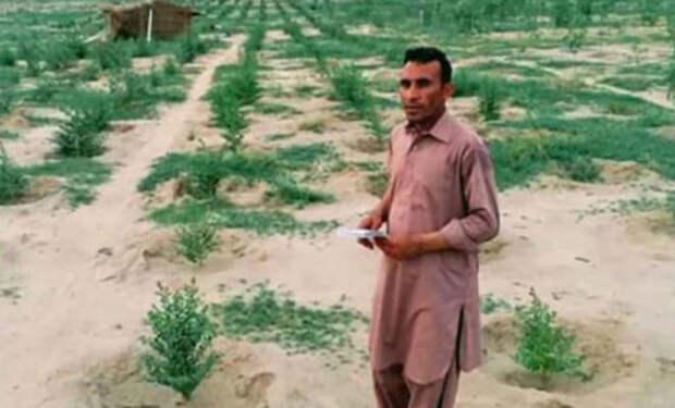 Мужчина каждый день ходил в пустыню и сажал саженцы. Через два года на месте пустыни появился лес