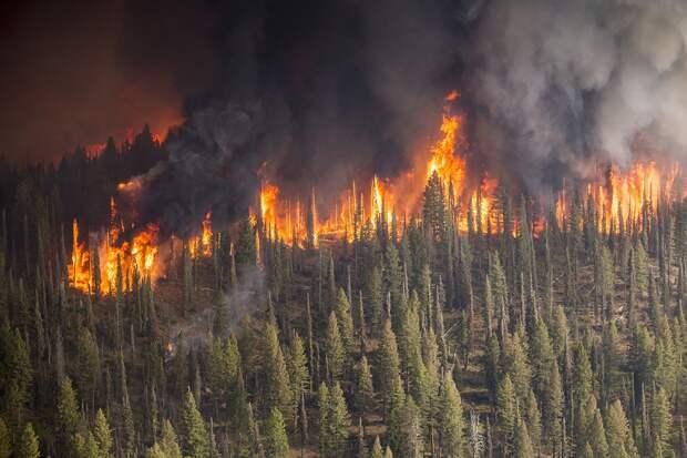 Лесной пожар бушует рядом с хранилищем радиоактивных отходов на Украине