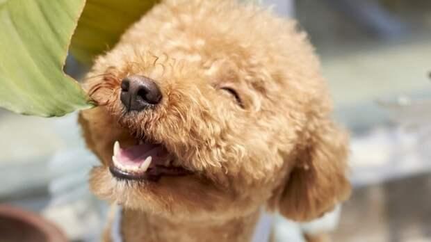 Собакам погибшей на Урале Instagram-блогерши ищут новых хозяев