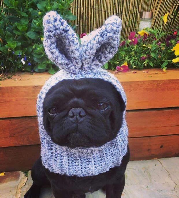 Мопс-кролик вязание, новый год, подарки