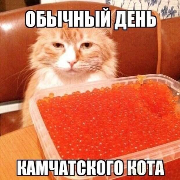 Возможно, это изображение (в помещении и текст «обычный день камчатского кота»)