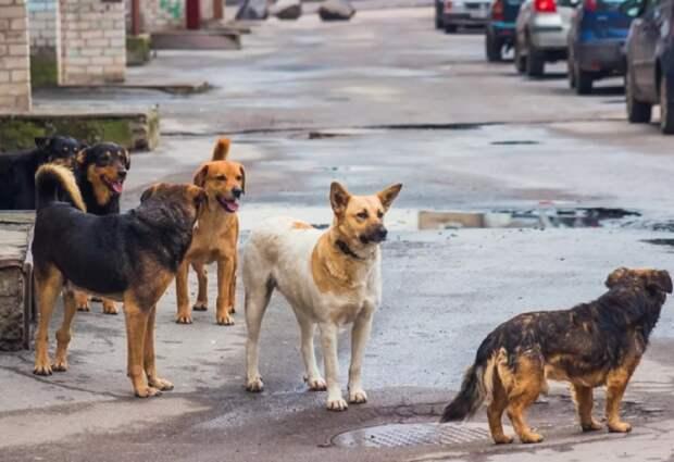 Астраханского экс-чиновника обвинили в нашествии бродячих собак