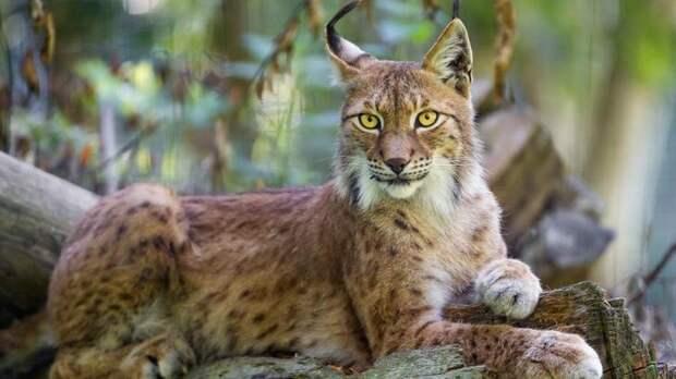 NewPix.ru - Топ 10 наиболее красивых животных в мире