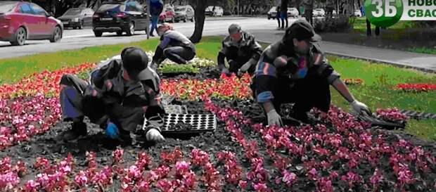 Видео: оформление летних цветников в СВАО