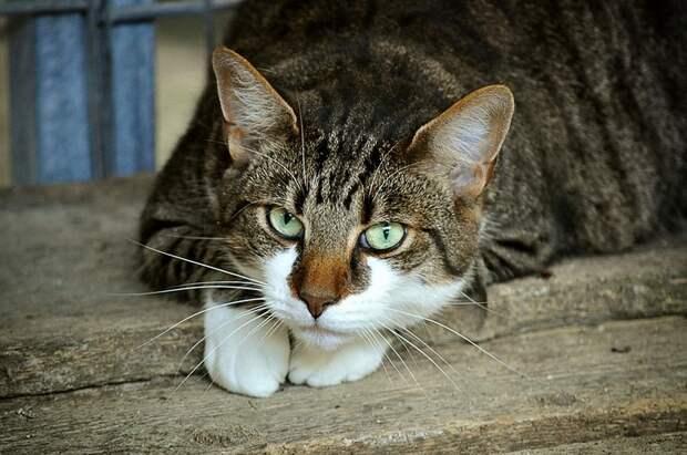 «Можешь убираться со своим котом!»