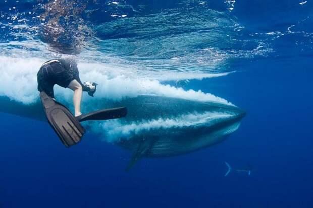 Дайвер едва не угодил в пасть киту (8 фото)