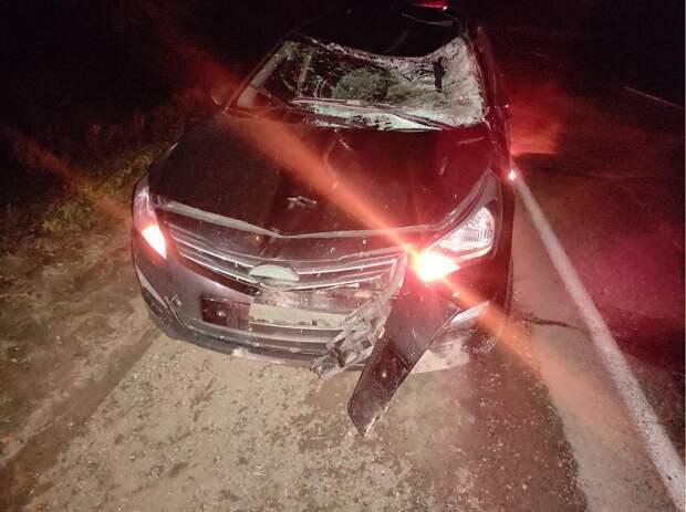 Водитель иномарки получил травмы в аварии с лосем на трассе Ижевск-Ува