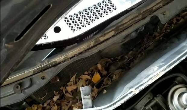Как очистить пространство под жабо автомобиля