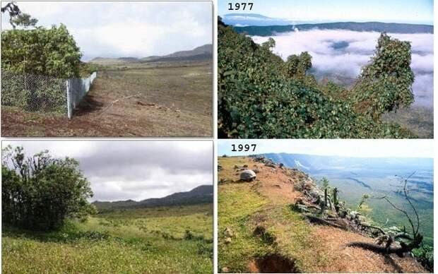 Кто такие козы Иуды и зачем на Галапагосских островах уничтожили обычных коз