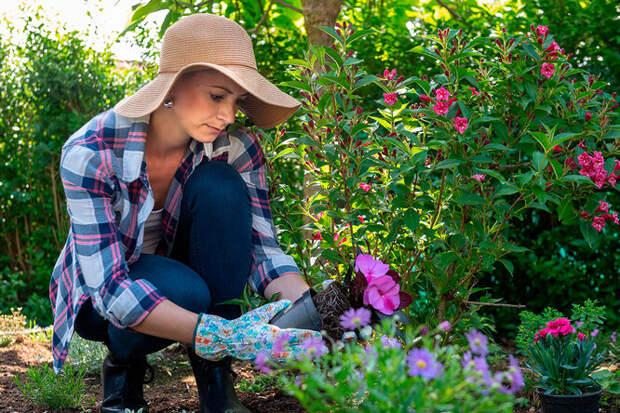 Плохая совместимость: какие овощи, деревья и кустарники нельзя сажать рядом
