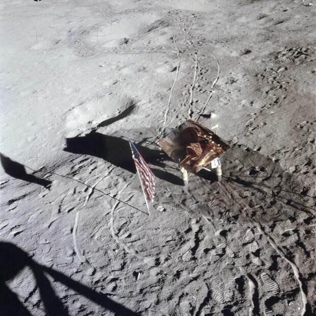 Куда пропали лунные деревья из семян с «Аполлона-14», и как вышло, что о них забыли