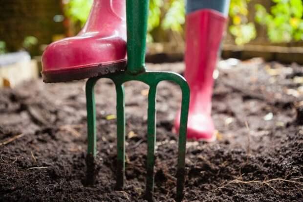 Ошибки, которые совершают начинающие садоводы