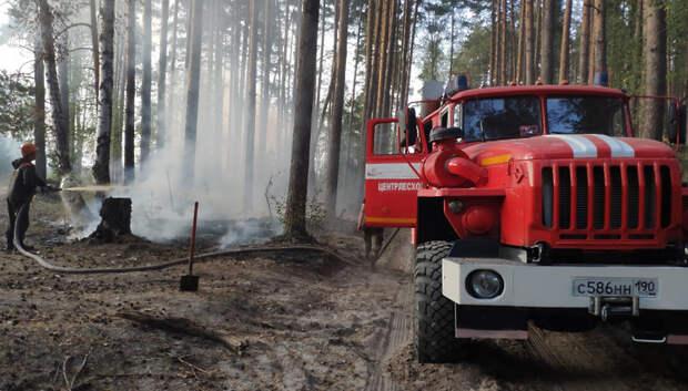 Подсчитан ущерб подмосковных лесов от пожаров