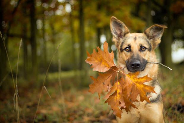 Кинолог предупредил об опасности осенних листьев для собак