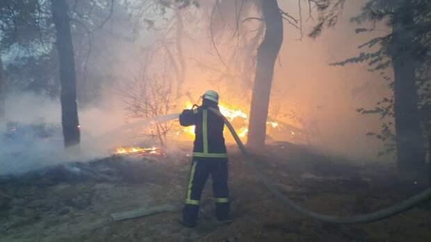 Пожарные тушат лес