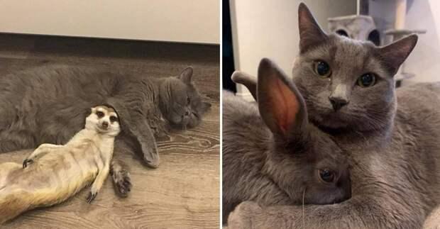 15 пар животных, доказавших, что у дружбы нет преград