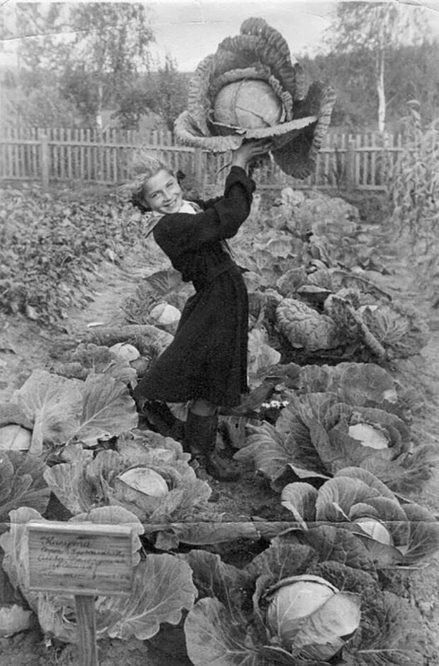 Девушка с капустой на пришкольном участке в Фаленской совхозной семилетней школе. 1954 г.