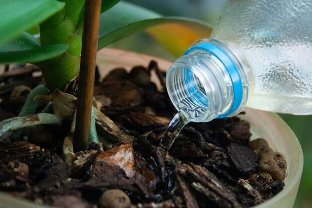 Чем поможет комнатным растениям перекись водорода