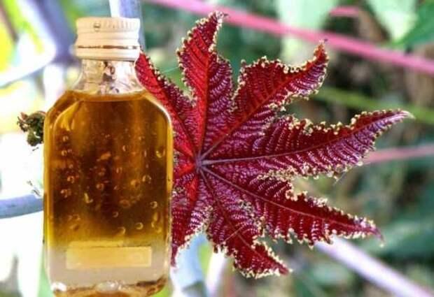 Касторовое масло как отличное средство для поддержания красоты